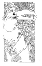 Belize jungle life colouring-in sheets