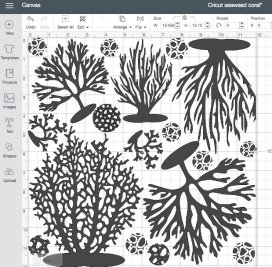 Cricut Coral DS seaweed coral 30 May 2018 21-59